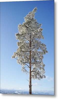 Winter Tree Germany Metal Print by Francesco Emanuele Carucci