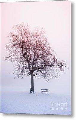 Winter Tree In Fog At Sunrise Metal Print by Elena Elisseeva