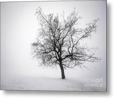 Winter Tree In Fog Metal Print by Elena Elisseeva