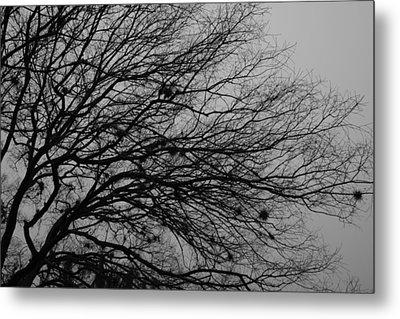 Winter Tree Metal Print by Kimberly Oegerle