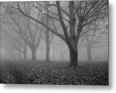 Winter Trees In The Mist Metal Print by Georgia Fowler