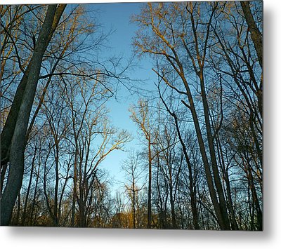 Metal Print featuring the photograph Winter Trees by Pete Trenholm