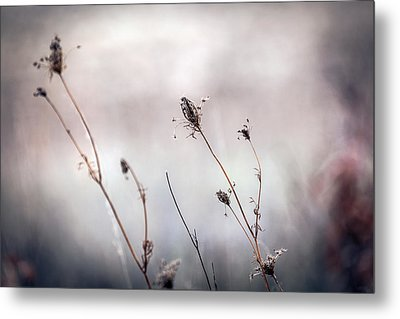 Metal Print featuring the photograph Winter Wild Flowers by Sennie Pierson