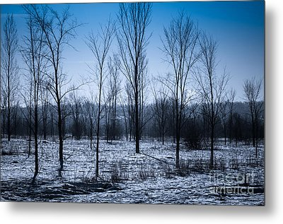 Metal Print featuring the photograph Winter Wonderland by Bianca Nadeau
