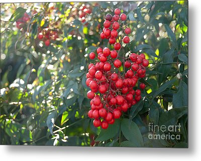 Metal Print featuring the photograph Winter's Berries by Lena Wilhite