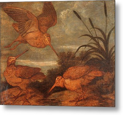 Woodcock At Dusk, Francis Barlow, 1626-1702 Metal Print by Litz Collection