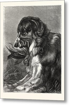 Woodcock-shooting, Hunt, Hunting, Dog Metal Print by English School