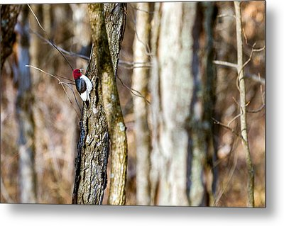 Metal Print featuring the photograph Woody by Sennie Pierson