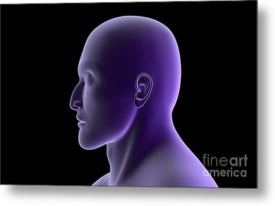 X-ray View Of Human Face, Profile View Metal Print by Stocktrek Images