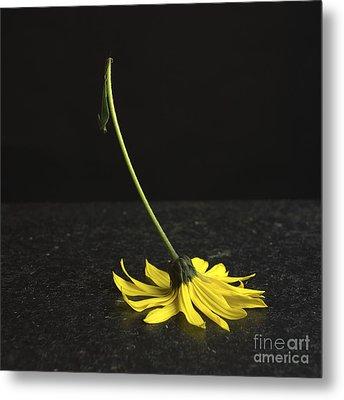 Yellow Daisy Metal Print by Bernard Jaubert