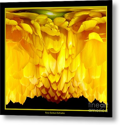 Yellow Ranunculus Abstract Metal Print by Rose Santuci-Sofranko