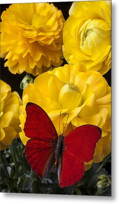Yellow Ranunculus And Red Butterfly Metal Print by Garry Gay