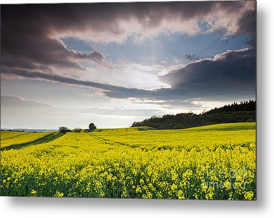 Yellow Rapeseed Field Beautiful Metal Print by Boon Mee