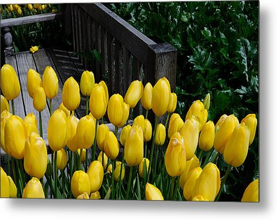 Metal Print featuring the photograph Yellow Tulips by Haleh Mahbod