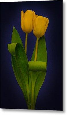 Yellow Tulips On A Blue Background Metal Print by Eva Kondzialkiewicz