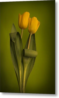 Yellow Tulips On A Green Background Metal Print by Eva Kondzialkiewicz