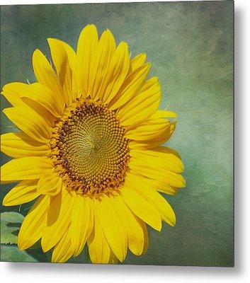 You Are My Sunshine Metal Print by Kim Hojnacki