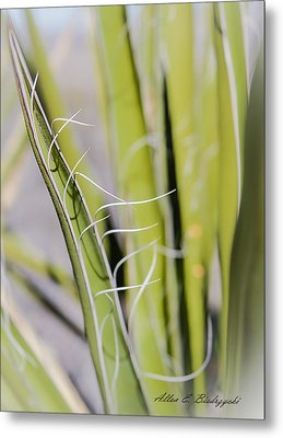 Metal Print featuring the photograph Yucca by Allen Biedrzycki