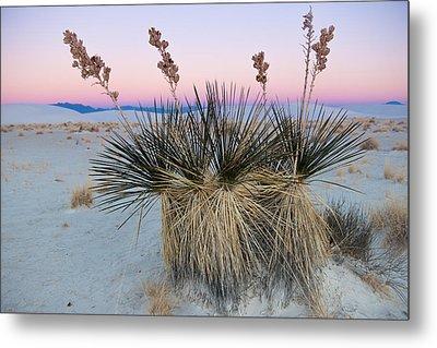 Yucca Dawn Metal Print by Roger Clifford
