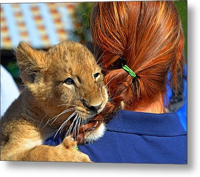 Zootography3 Zion The Lion Cub Likes Redheads Metal Print by Jeff at JSJ Photography