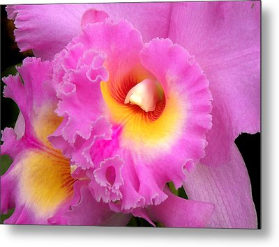 Cattleya Orchid 1 Metal Print by Julie Palencia