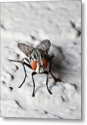 Fly On The Wall Metal Print by Nick  Shirghio