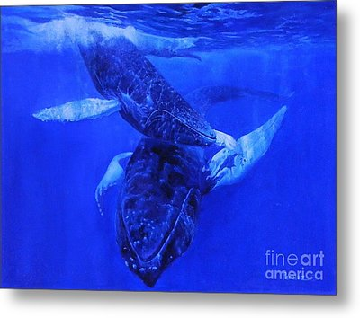 Playful Humpbacks Metal Print