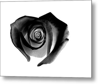 Black Rose Metal Print by Glennis Siverson