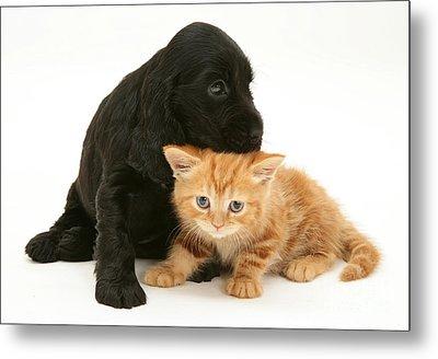Cocker Spaniel Puppy And Kitten Metal Print by Jane Burton