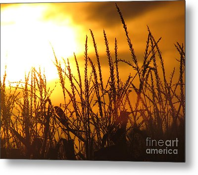 Metal Print featuring the photograph Farming Sunset by France Laliberte