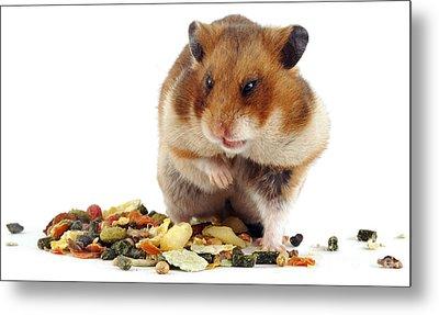 Golden Hamster Metal Print by Jane Burton