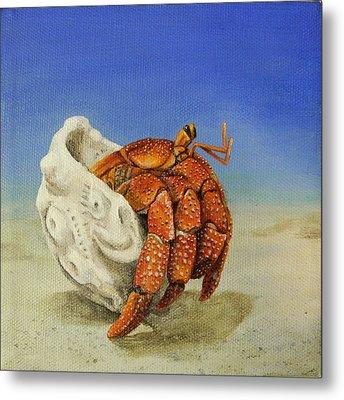 Hermit Crab Metal Print by Cindy D Chinn