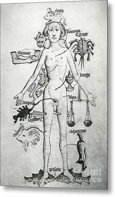 Melothesic Figure Metal Print by Photo Researchers