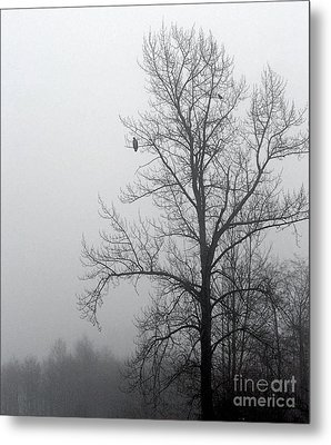 Misty Morning Vigil Metal Print by KD Johnson