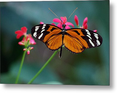 Monarch Butterfly Metal Print by Luis Esteves