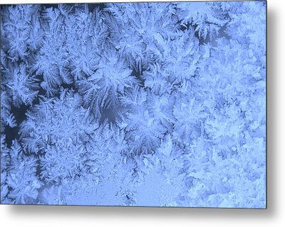 Morning Frost Metal Print by Ellery Russell