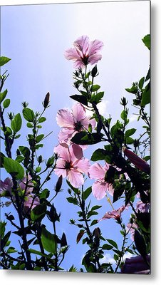Pink Hibiscus Metal Print by Kevin Smith