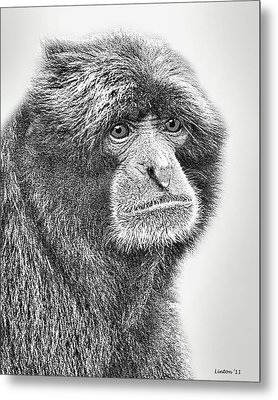 Siamang Metal Print by Larry Linton