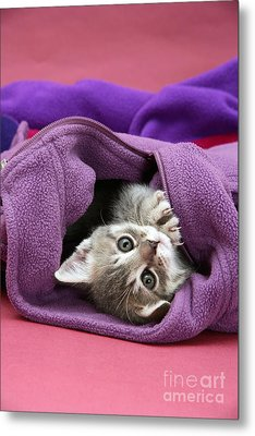 Tabby Kitten Metal Print by Jane Burton