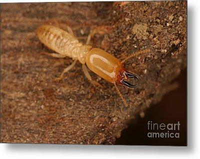 Termite Metal Print