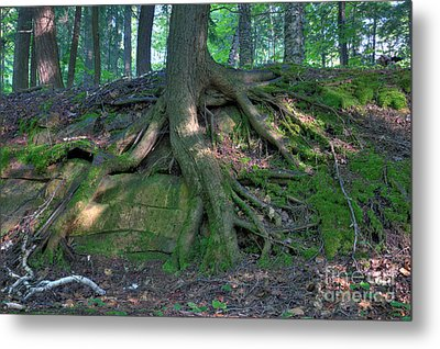 Tree Growing Over A Rock Metal Print by Ted Kinsman