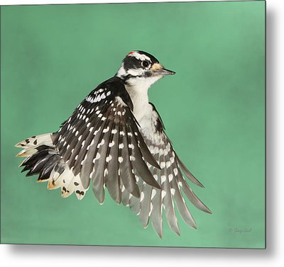 Metal Print featuring the photograph Wing Flaps Down by Gerry Sibell