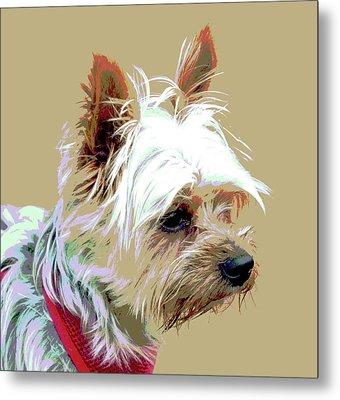 Yorkshire Terrier Metal Print by Dorrie Pelzer