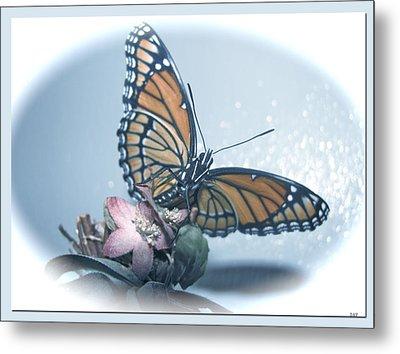 Butterfly Collection Design Metal Print by Debra     Vatalaro