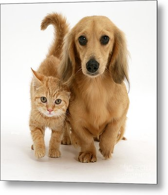 Kitten And Puppy Metal Print by Jane Burton