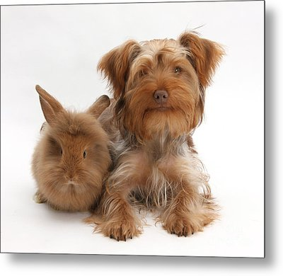 Puppy And Rabbit Metal Print by Mark Taylor