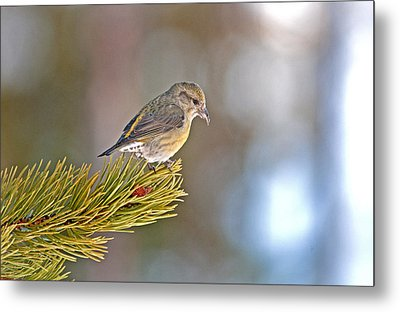 Bird Metal Print by Elijah Weber