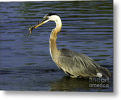 Metal Print featuring the photograph 2 For 1 Dinner Special by Clayton Bruster