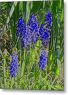 Metal Print featuring the photograph Grape Hyacinths by Holly Martinson