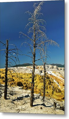 Mammoth Upper Terrace Metal Print by Greg Norrell